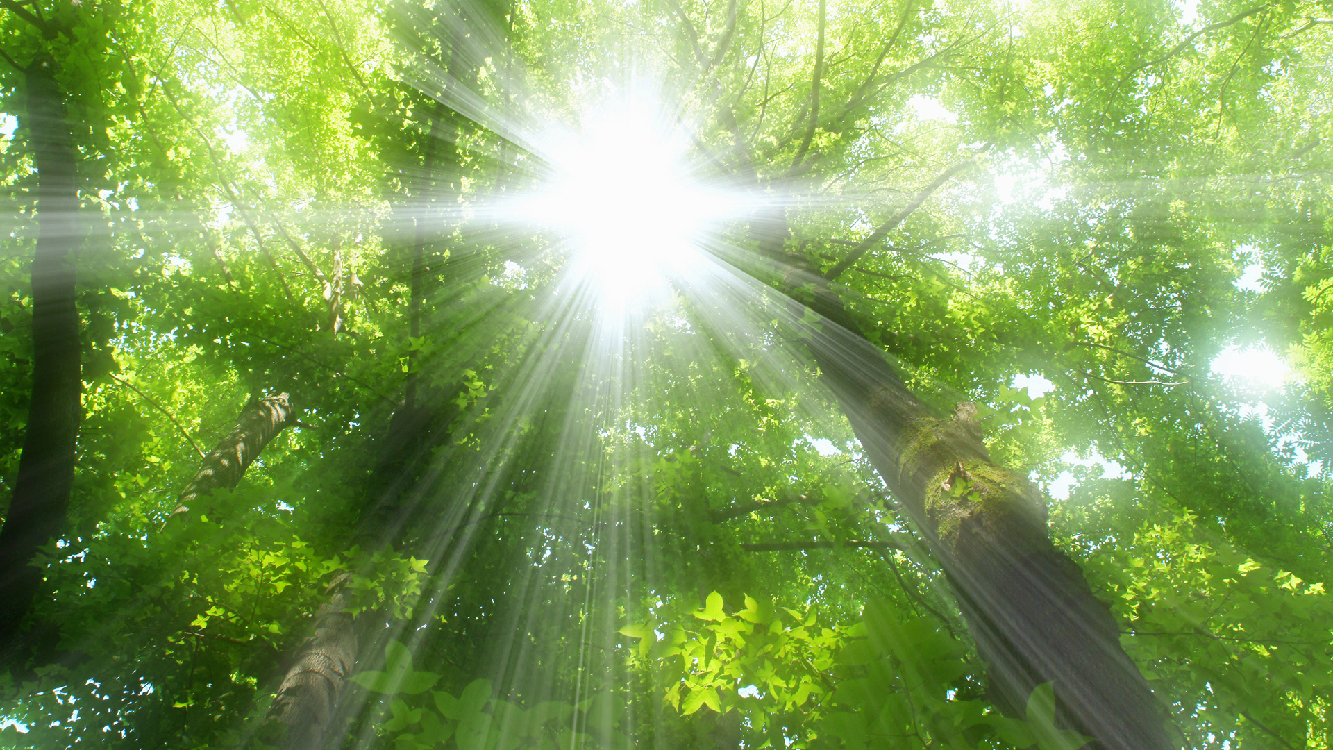 Sunlight and trees with green leaves, soft focus, lens flare, Osaka prefecture, Japan